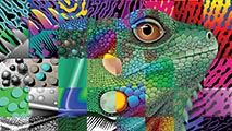 http://www.frymire-art.com/wp-content/uploads/2013/05/colorful-creative-iguana1.jpg
